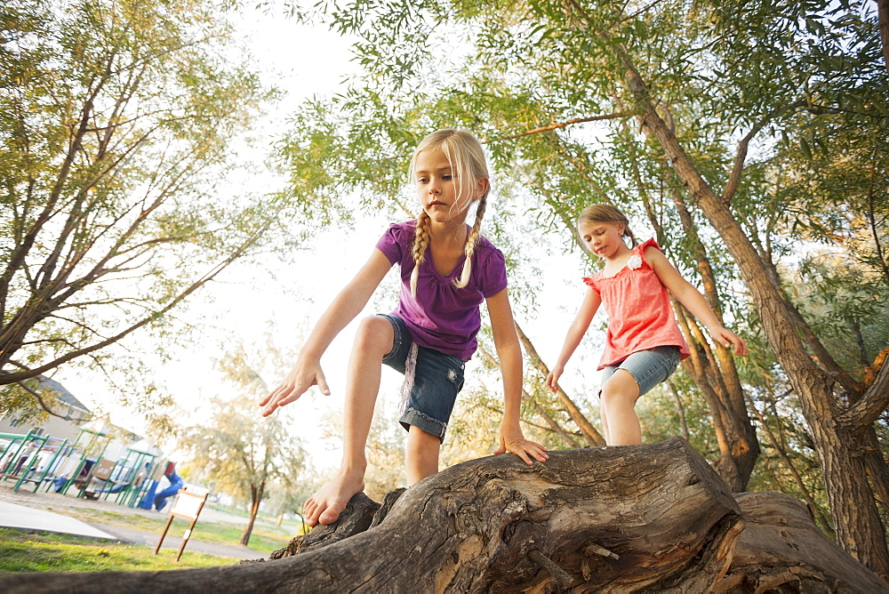 Two little girls (4-5, 6-7) climbing on very large tree branch, Lehi, Utah