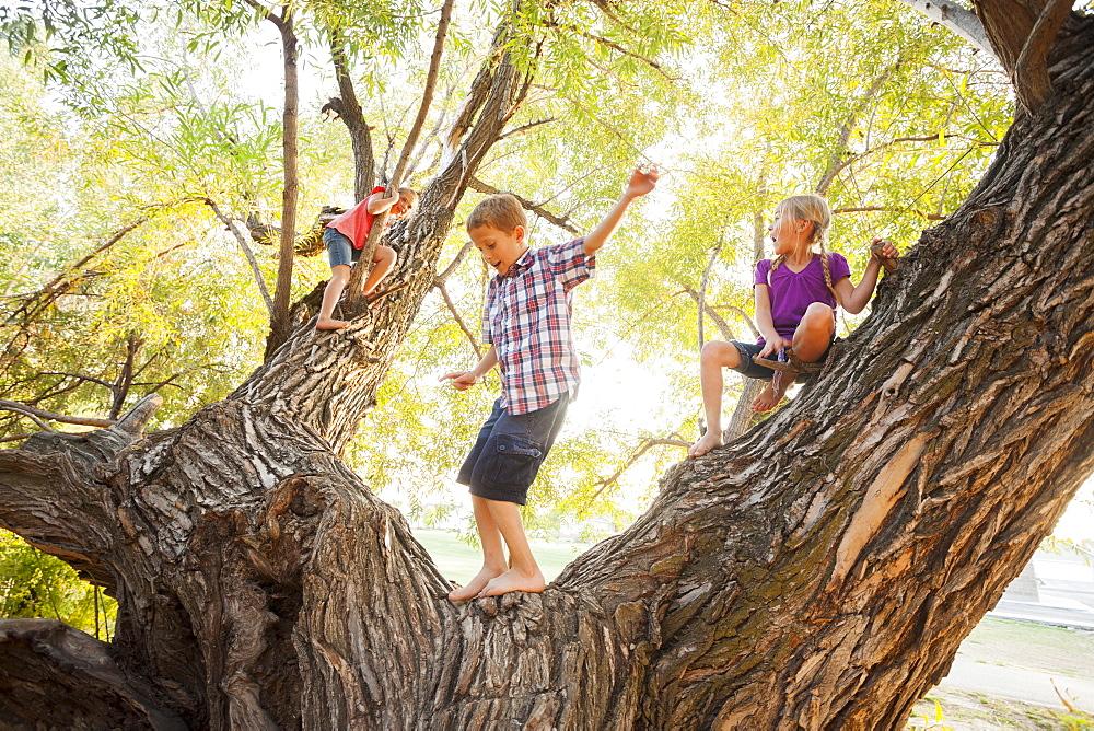 Three kids (4-5, 6-7) playing in huge tree, Lehi, Utah