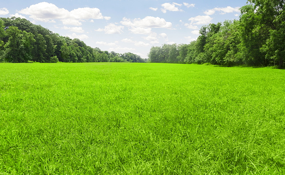 USA, Connecticut, Kent, green meadow
