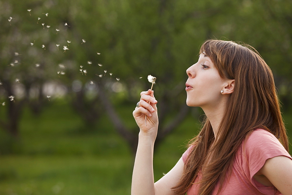 Young woman blowing Dandelion in orchard
