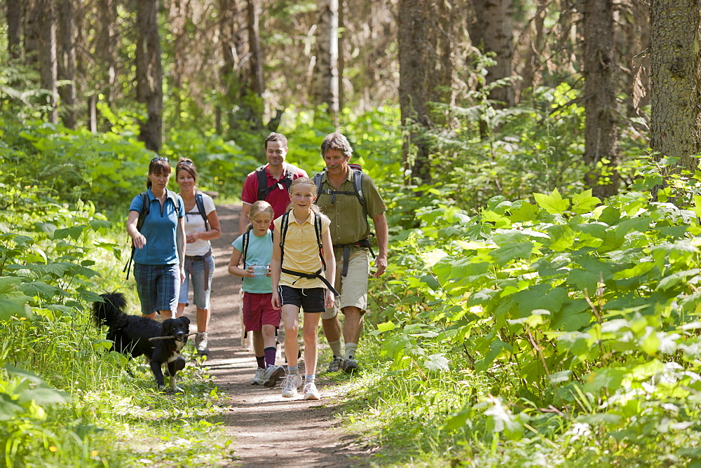 Canada, British Columbia, Fernie, family and dog hiking in forest