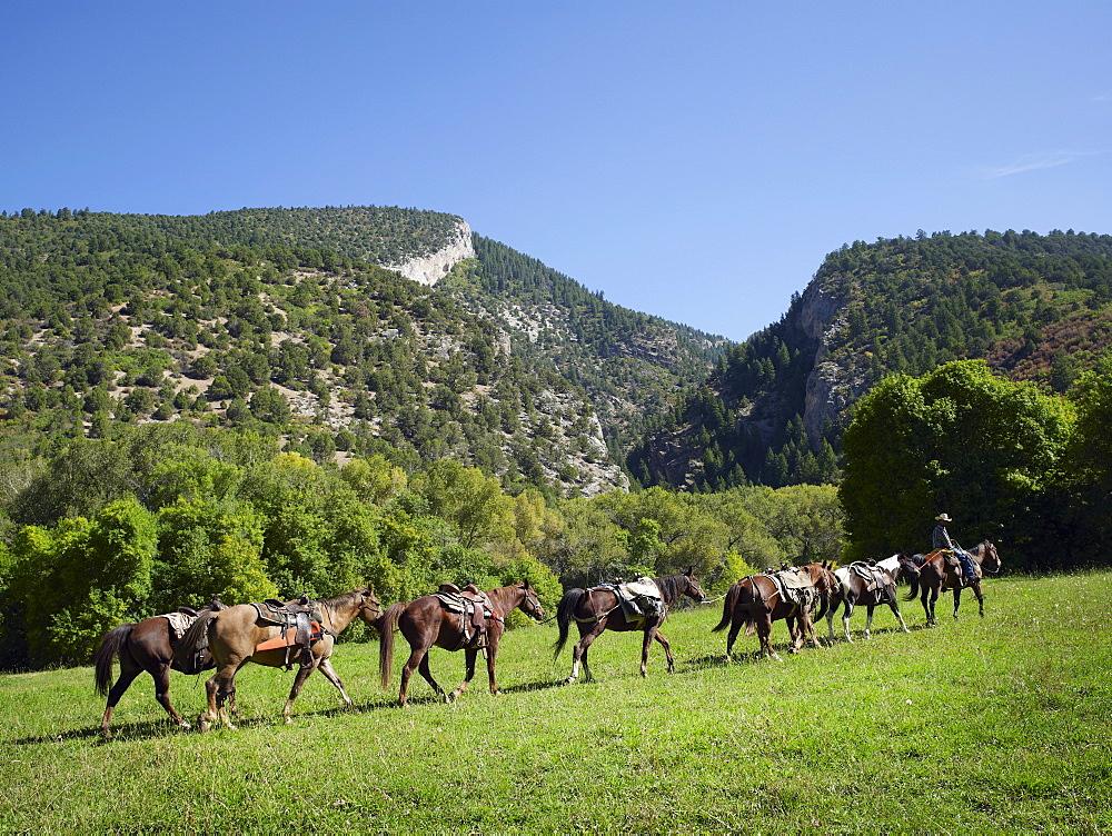 Horses walking in field