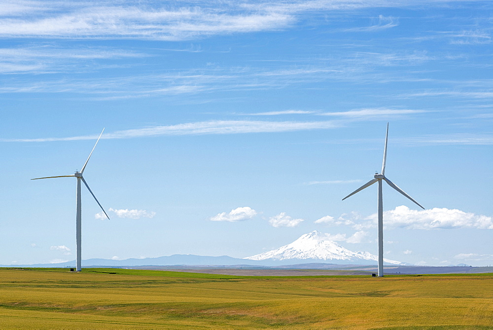 Wind turbines at green field with mountain on background, Oregon