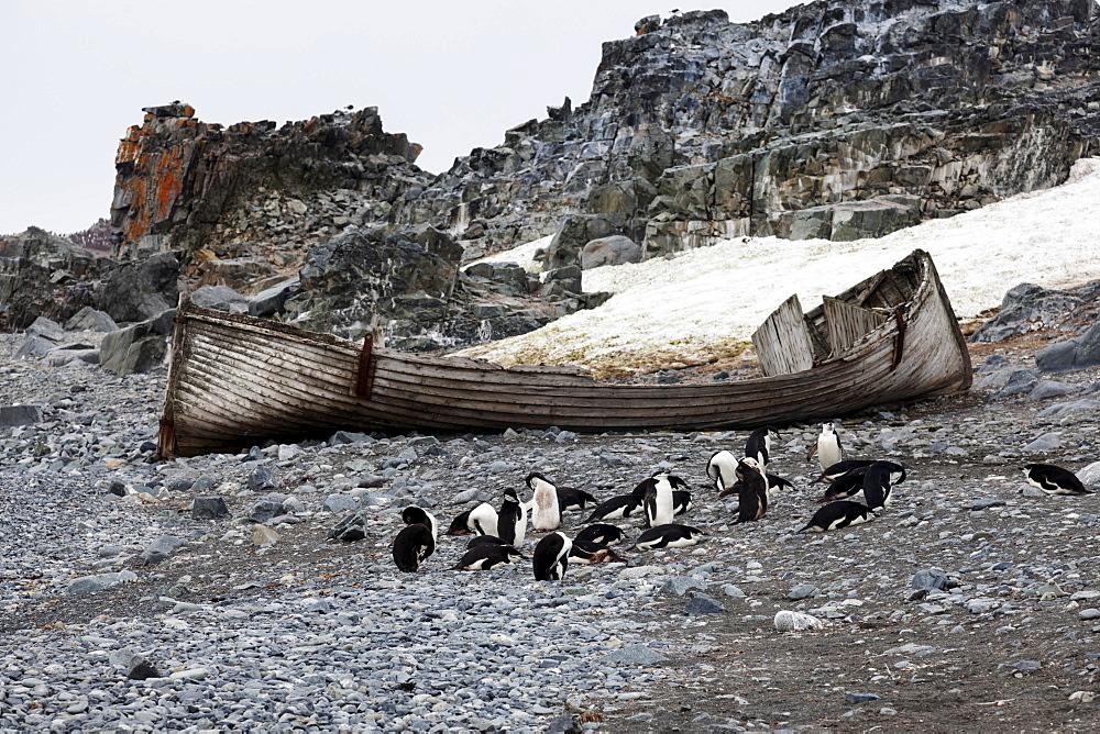 Medium group of penguins resting at beach, Antarctica