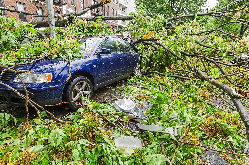 Car smashed by fallen tree, Brooklyn, NY, USA