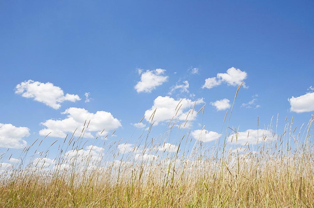 Cumulus clouds above grassy field, USA, Pennsylvania