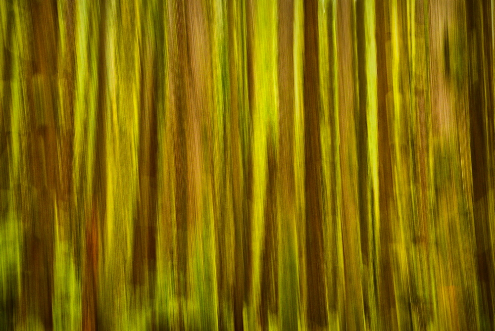 USA, Washington, Blurred tree trunks, USA, Washington