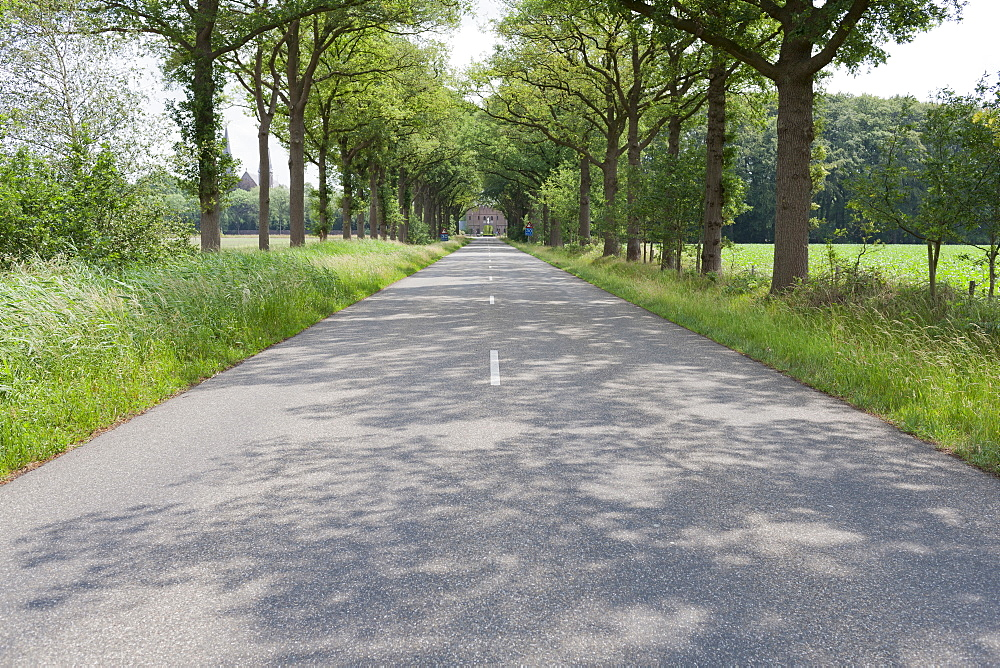 Netherlands, North-Brabant, Tilburg, Road lined with trees