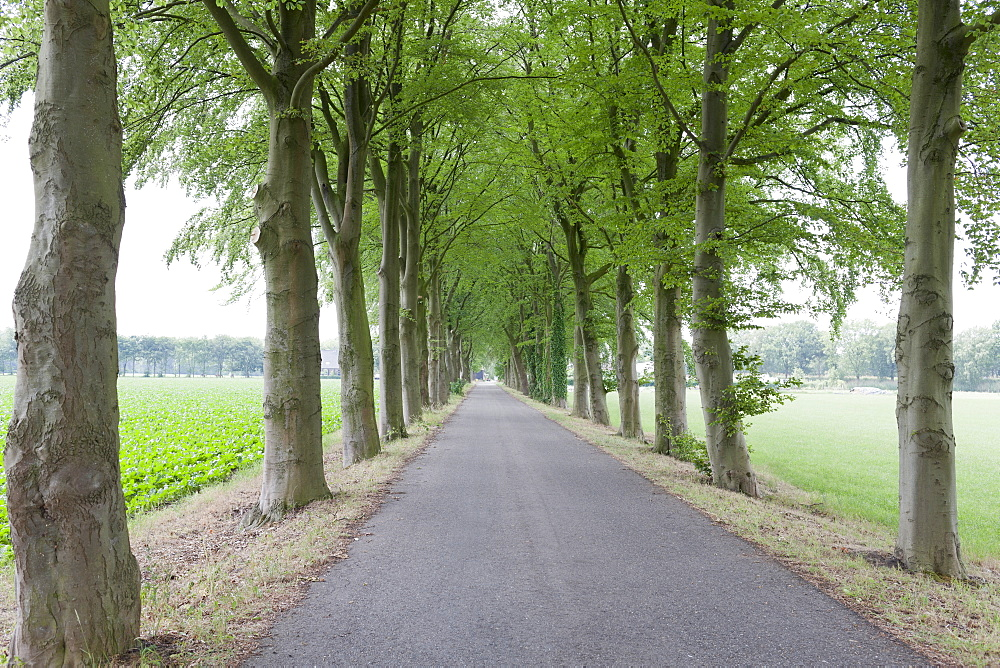Netherlands, North-Brabant, Tilburg, Single lane road lined with trees