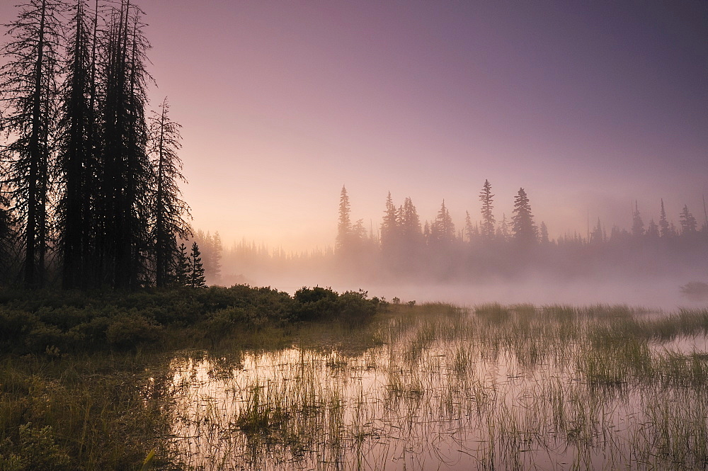 USA, Oregon, Foggy landscape at dawn