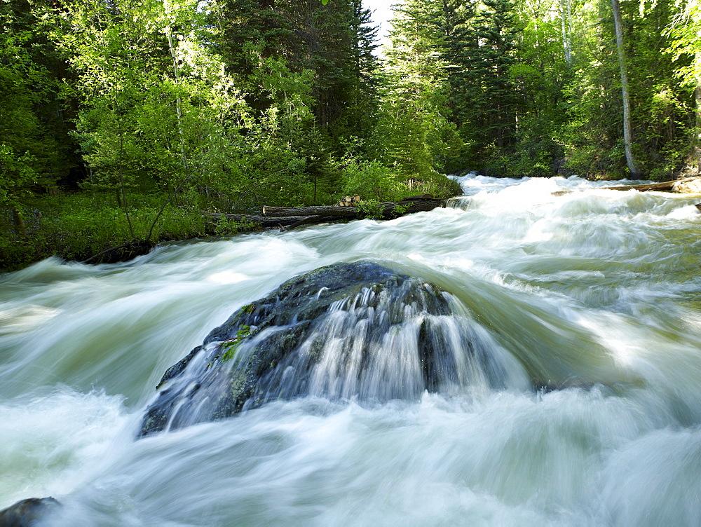 USA, Colorado, Mountain creek in forest, USA, Colorado