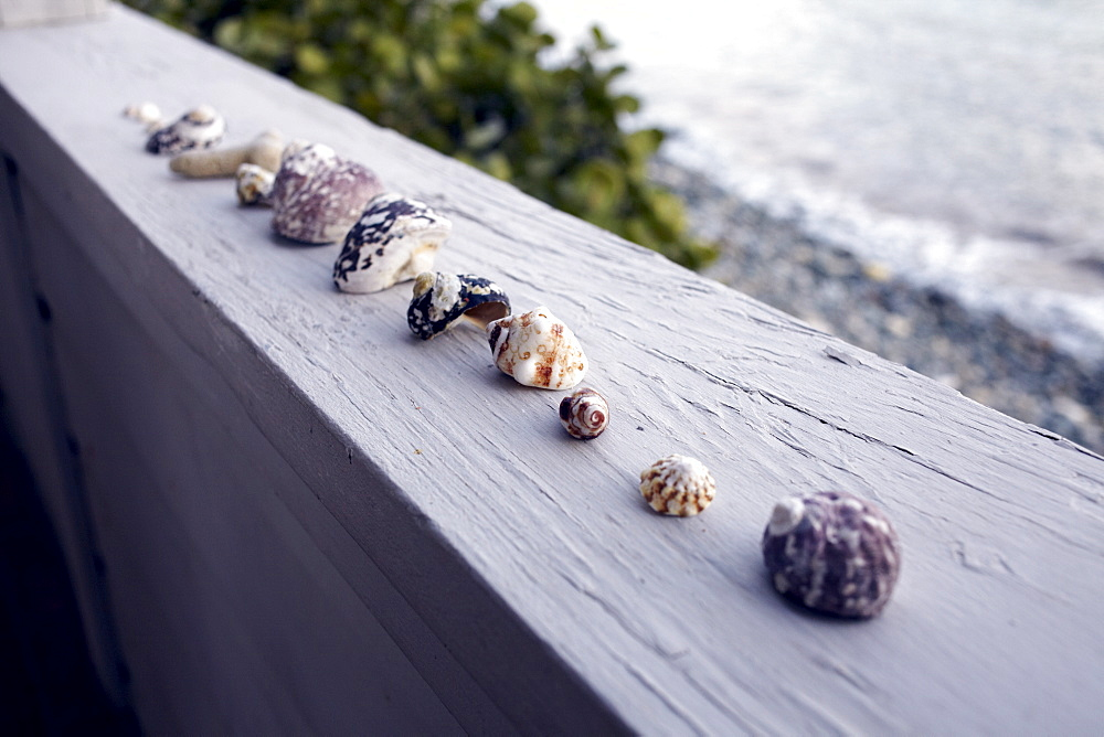 United States Virgin Islands, St. John, Seashells on terrace, United States Virgin Islands, St. John