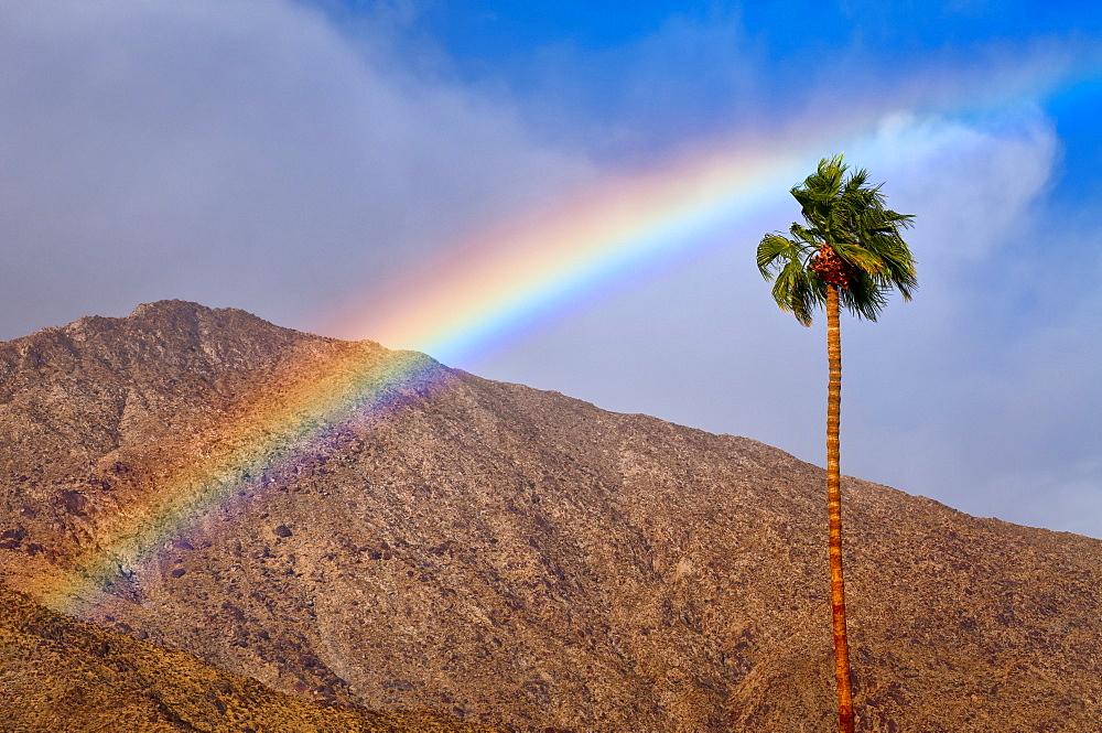 USA, California, Palm Springs, rainbow over palm tree