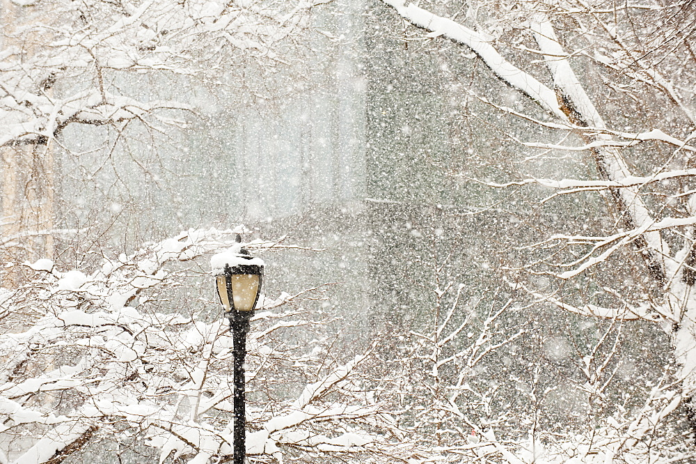 Snow covered tree branches and lamp post, apartment building in background