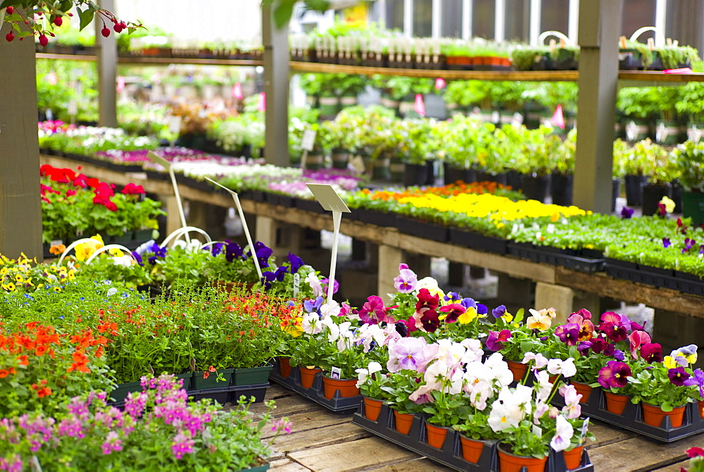 Garden flowers on display in greenhouse