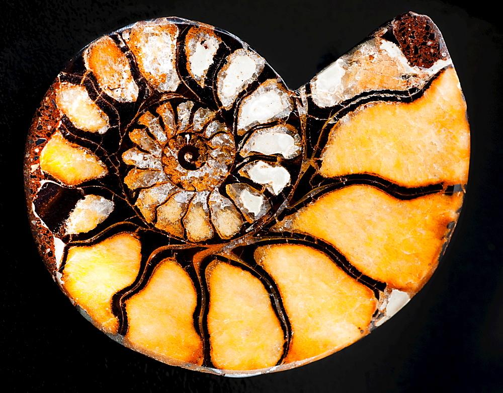 A nautilus shell