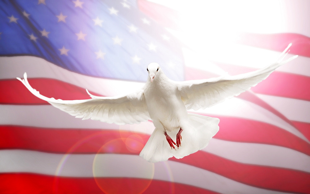 Dove flying in front of American flag