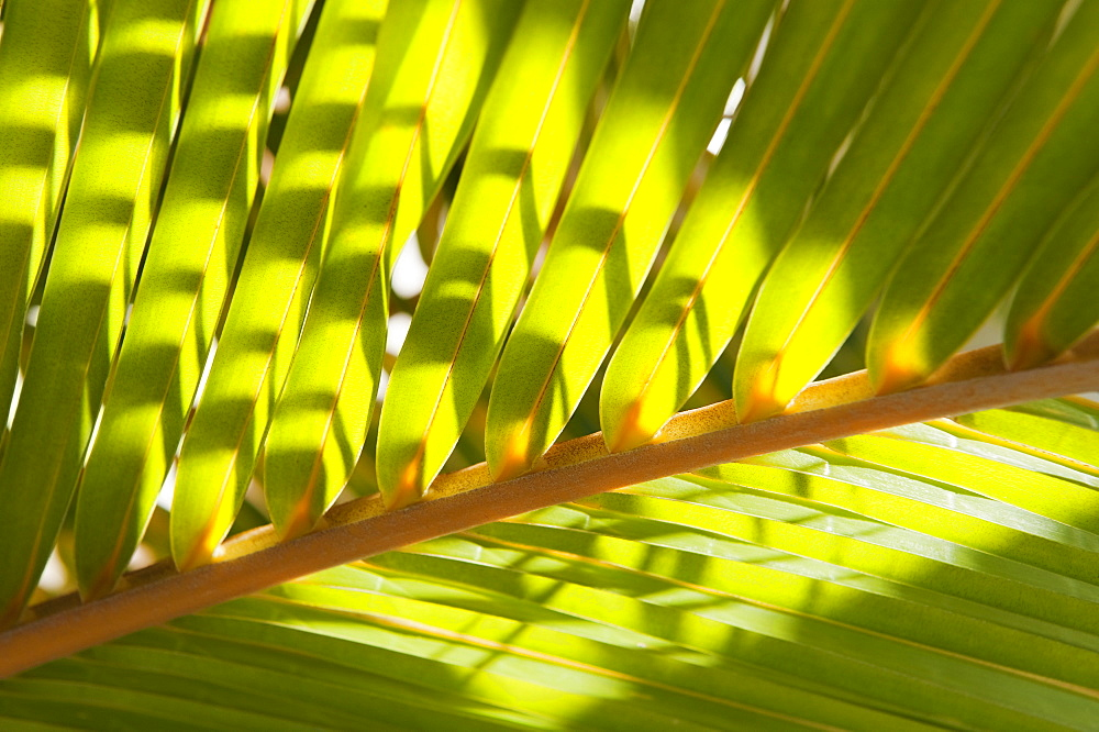 Close up of tropical palm frond