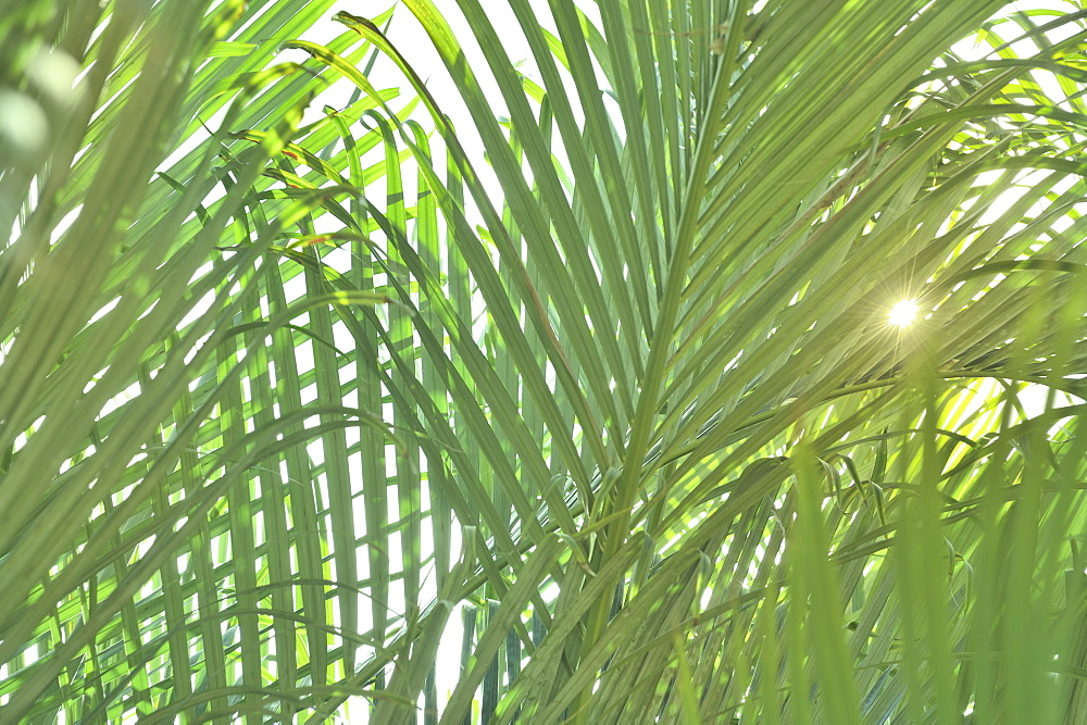 Sunlight on tropical plants