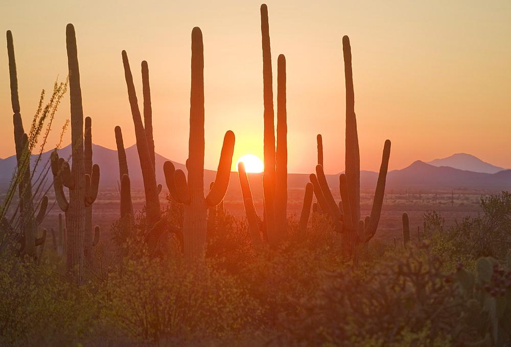 Sun setting over Saguaro National Park, Arizona