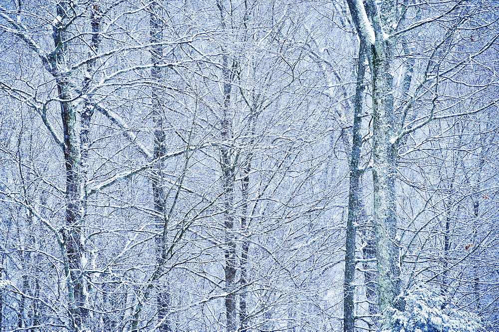 Trees covered in snow - 1178-9357