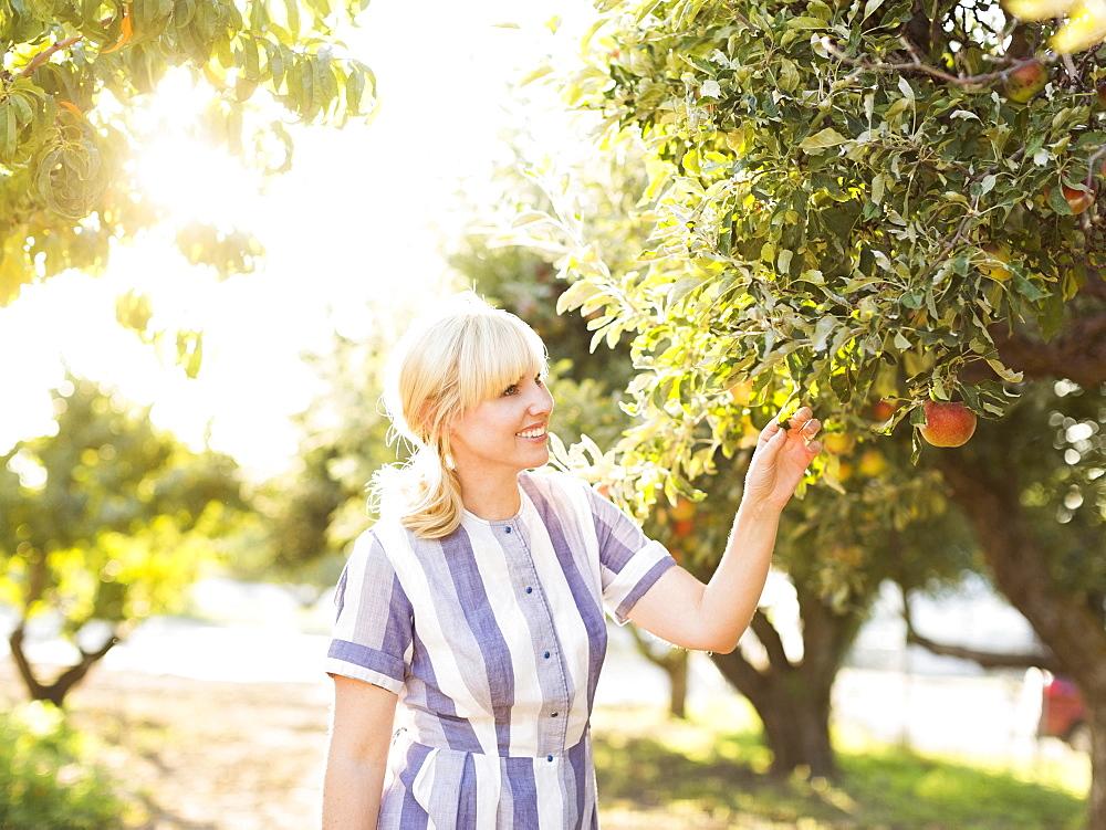 Woman picking apples in orchard, Salt Lake City, Utah - 1178-9444
