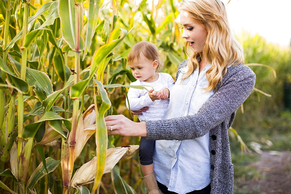 Mother and daughter (12-17 months) in corn field, Salt Lake City, Utah