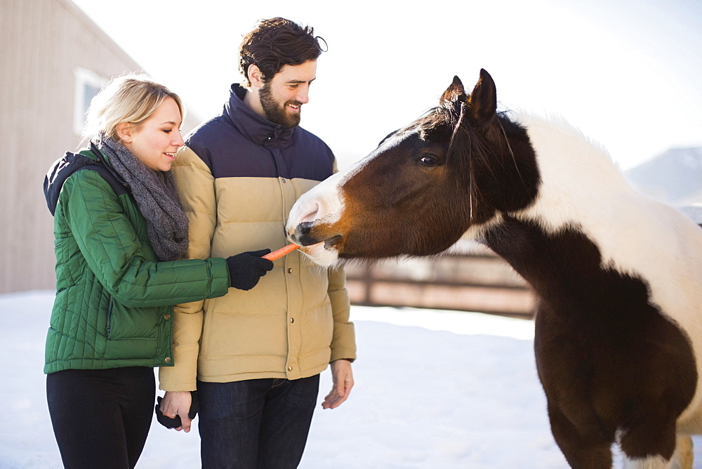 Young couple feeding horse with carrot