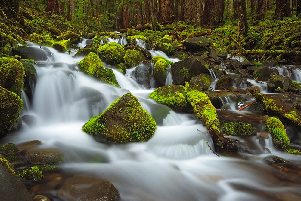 USA, Washington, Olympic National Park, Forest creek, USA, Washington, Olympic National Park