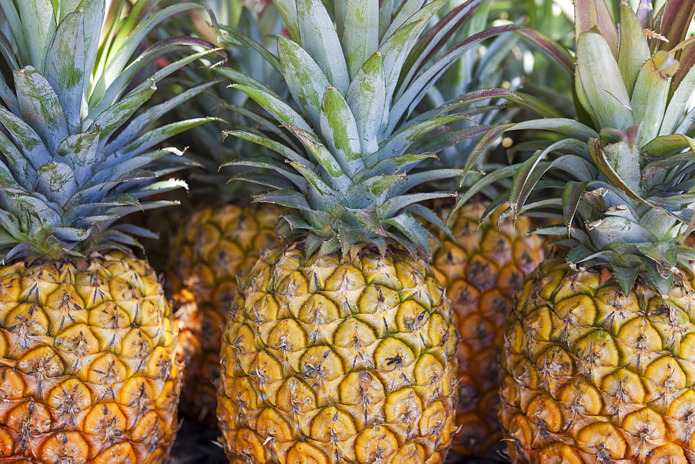 Rows of Pineapples for sale