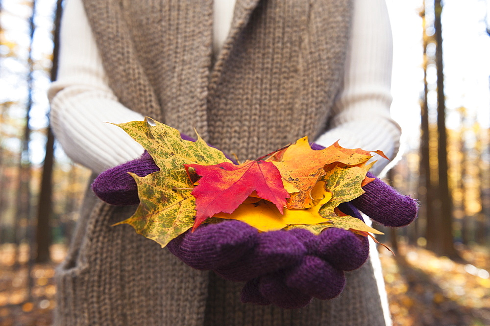 USA, New Jersey, Woman holding leaves in Autumn forest, mid section