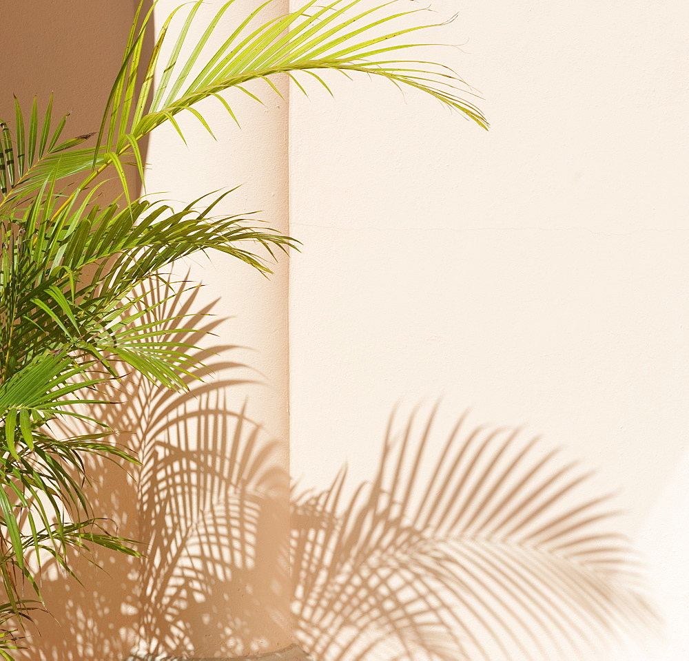 Shadow of tropical leaves