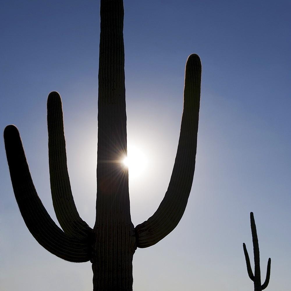 Sun shining behind cactus