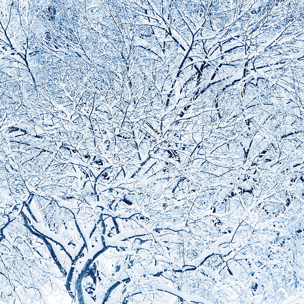 USA, New York, New York City, trees covered with snow in winter