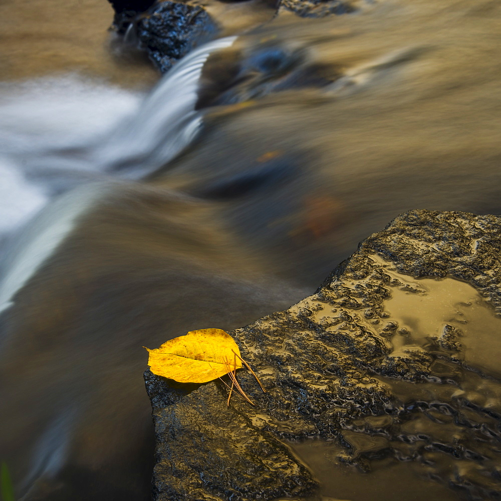 Leaf on edge of waterfall, Valdese, North Carolina