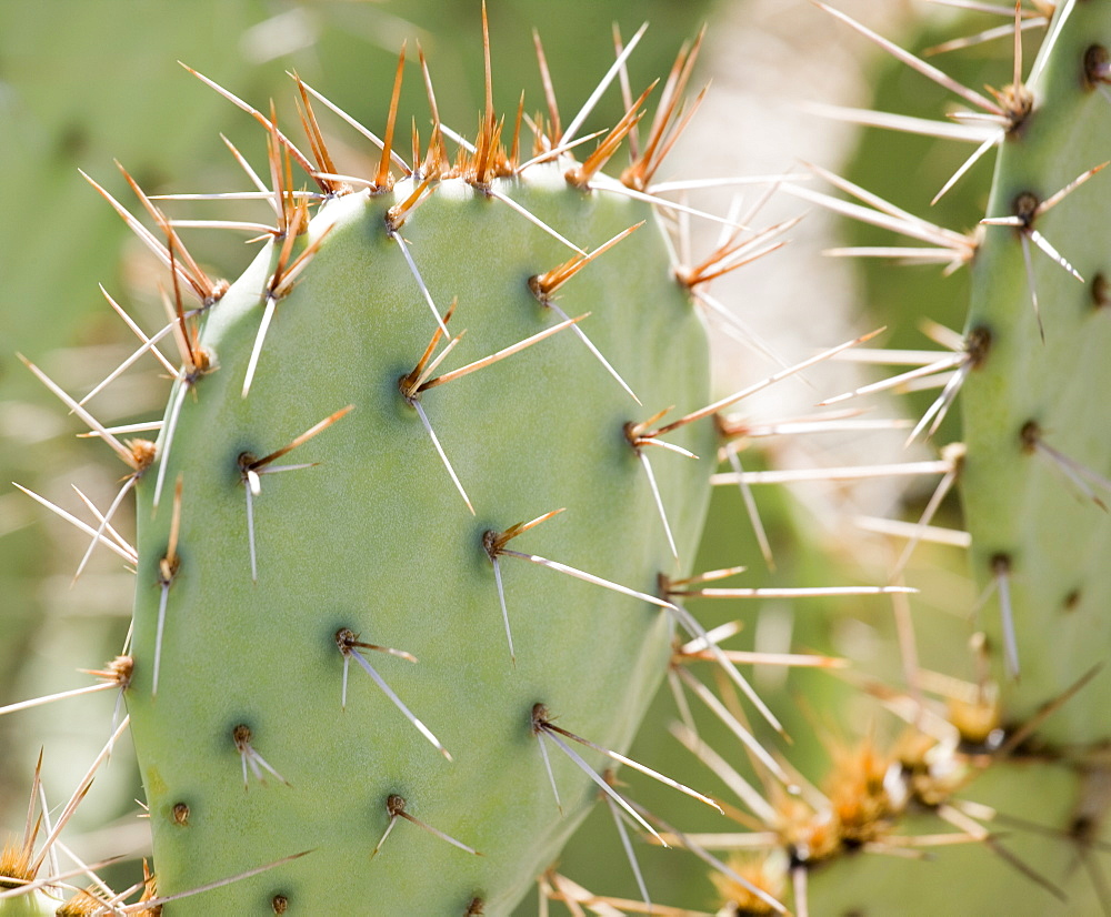 Close up of cactus, Arizona, United States