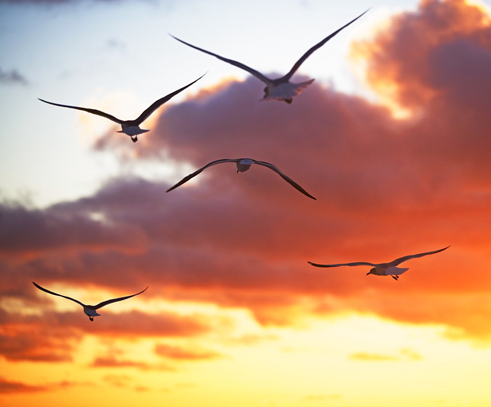 birds in the sunrise/sunset