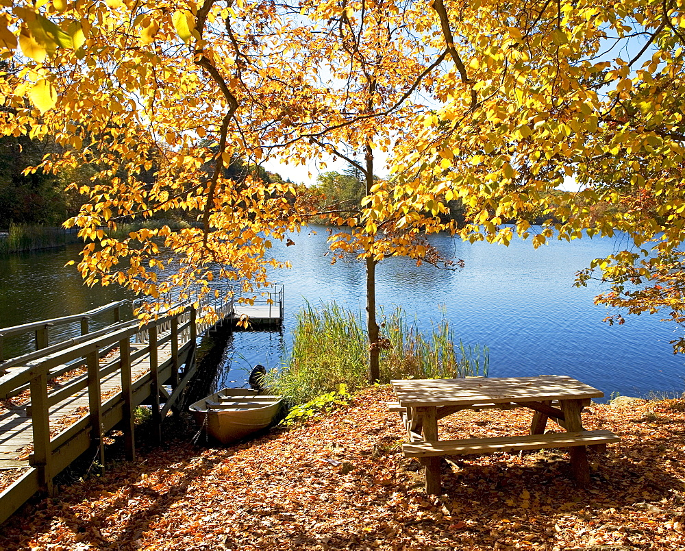 Picnic bench in autumn leaves near dock and lake