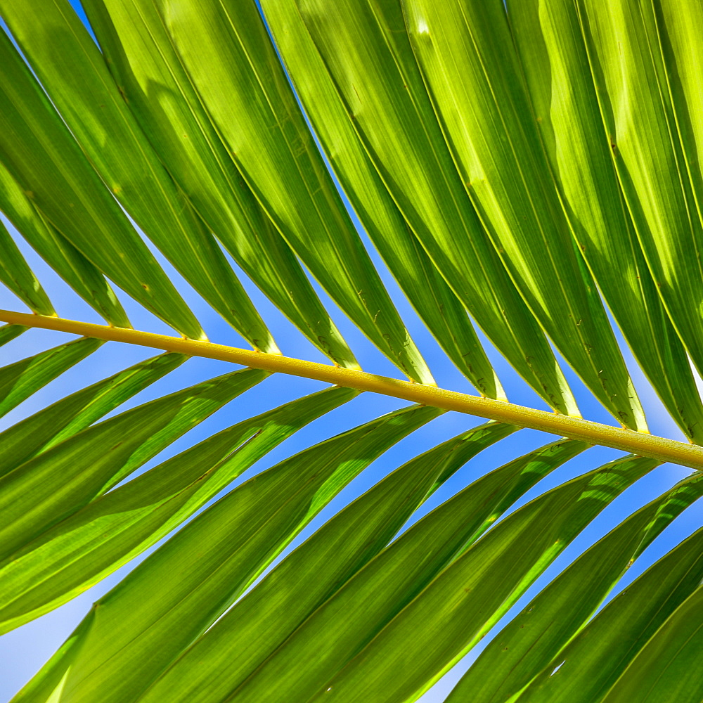 Sunlight in palm leaf, Palm Beach, Florida