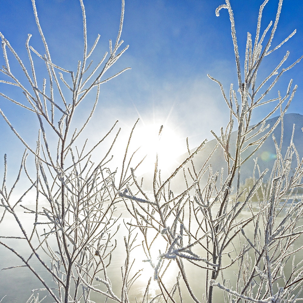 Frost on branches