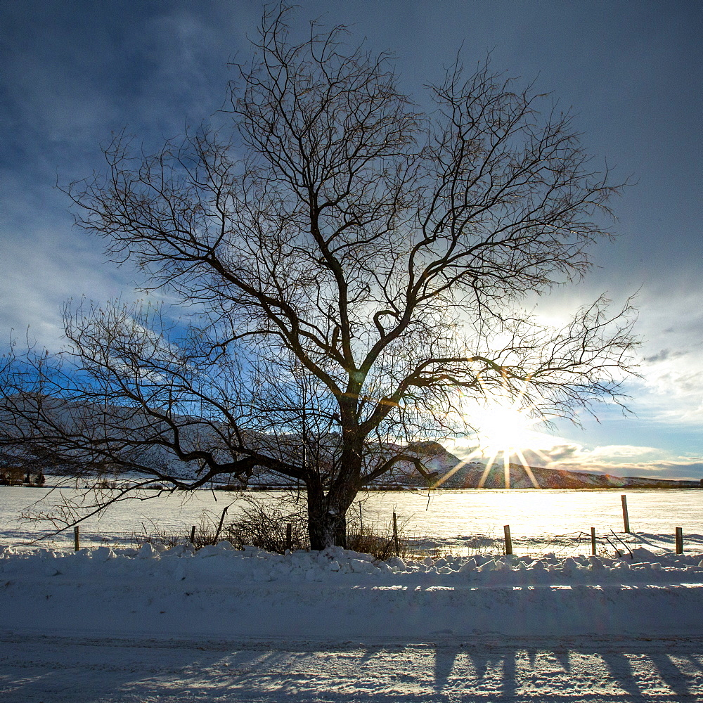 tree by snow field at sunrise in Picabo, Idaho