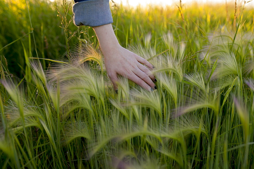 Woman's hand touching wheat