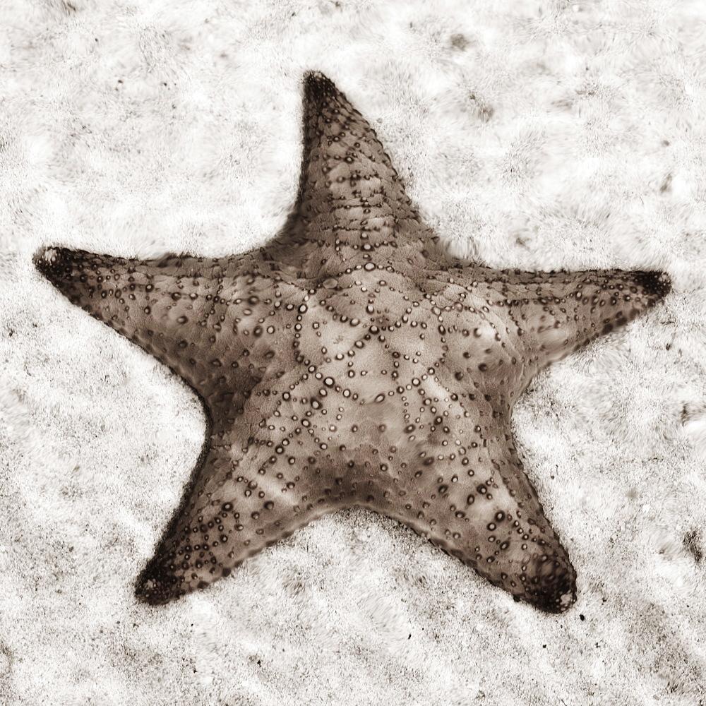 Still life of a starfish