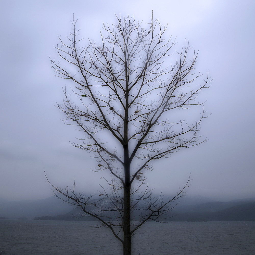 Single bare tree with grey sky
