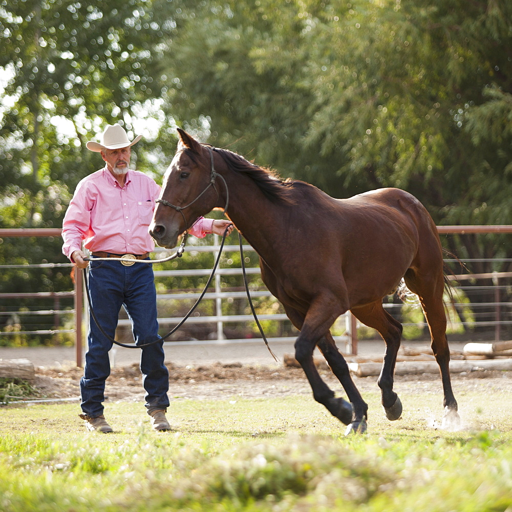 Senior man training horse in ranch