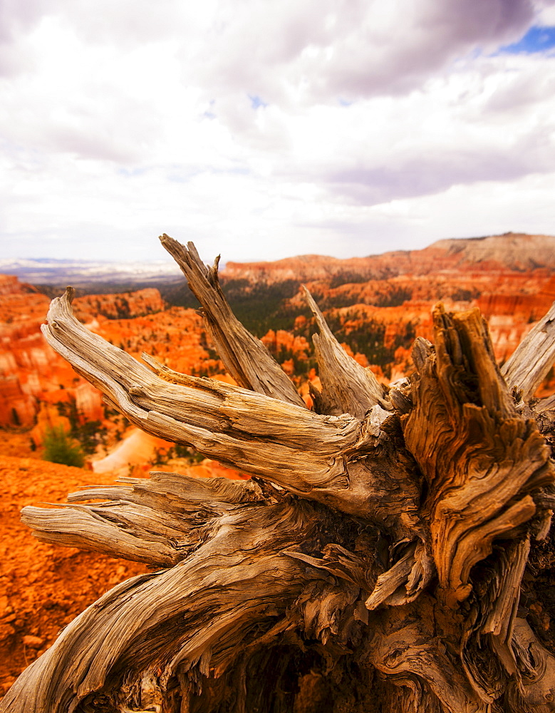 Landscape with root, Bryce Canyon, Utah