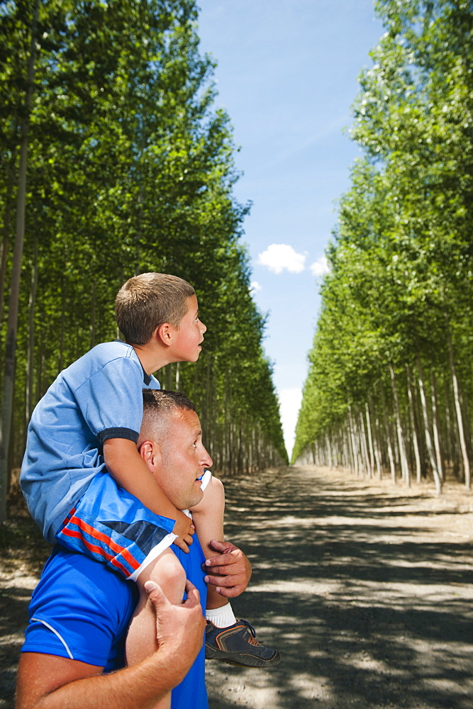 Father showing son (8-9) poplar trees in tree farm