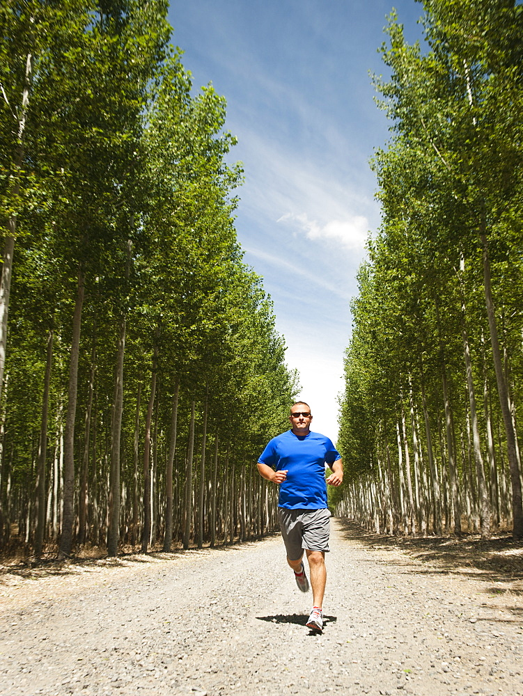 Man running between rows of poplar trees in tree farm