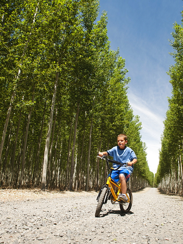 Boy (8-9) riding bike between poplar trees in tree farm