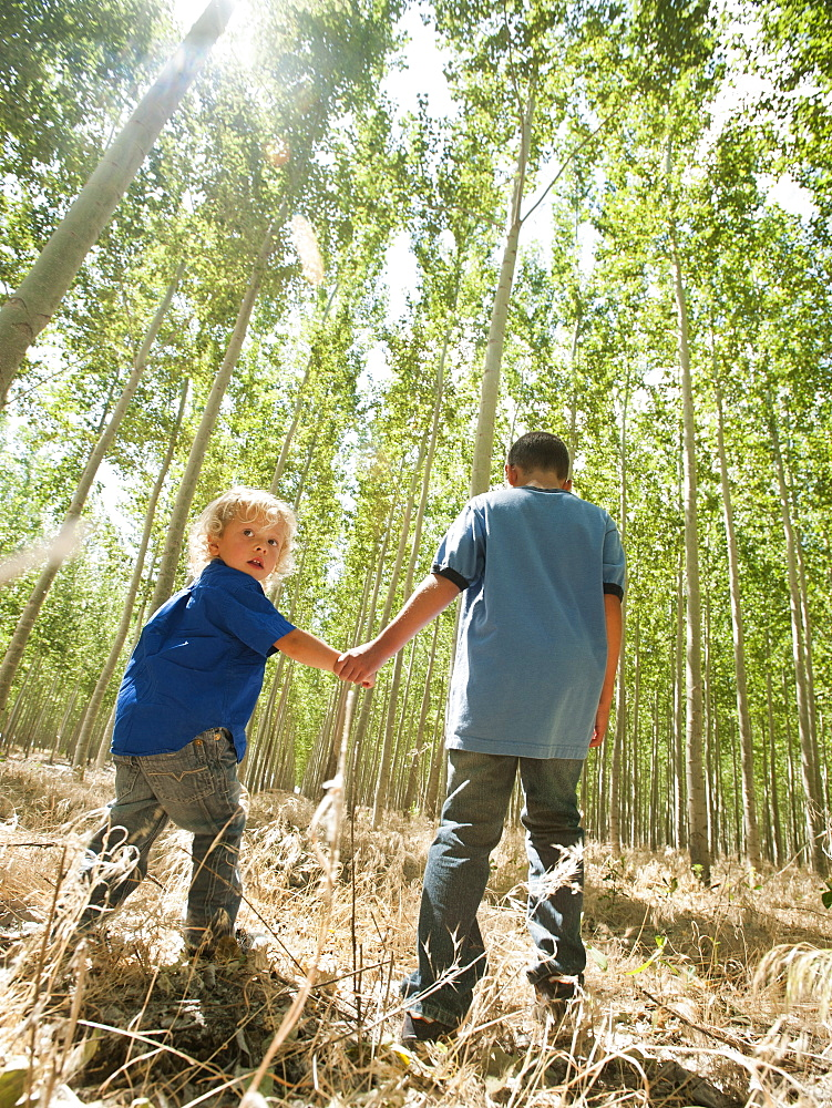 USA, Oregon, Boardman, Boys (8-9) walking between poplar trees in tree farm